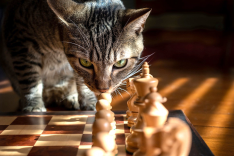 Eine Katze schleicht um ein Schachbrett
